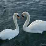 3482928286_3a88f40acc_m.jpg Love Birds by John & Mel Kots